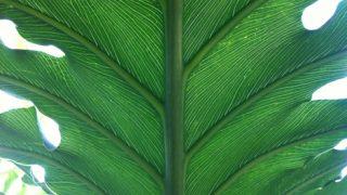 私が観葉植物を好きな理由、その魅力。そもそも観葉植物って何?