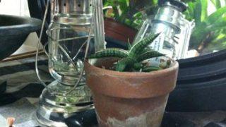 我が家の鉢(花器)のはなし