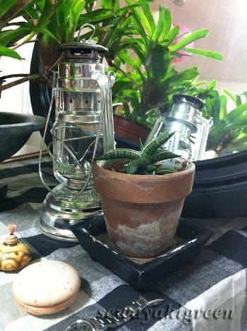 素焼き鉢とサンセベリア