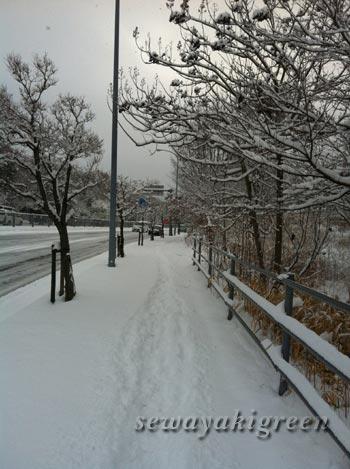 2016年1月20日(水)朝の景色