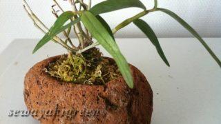 【軽石の鉢】何を植えようか、考えるのもまた楽しみ