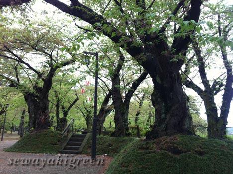 千秋公園(久保田城跡)