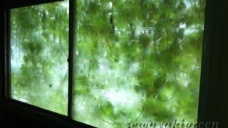 【ゴーヤ】の緑のカーテン、9月の今はこんな感じ