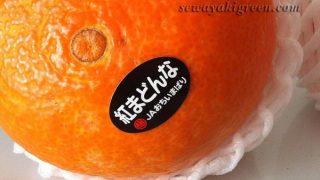 【紅まどんな】贅沢な柑橘だから、贈答にいいと思いました