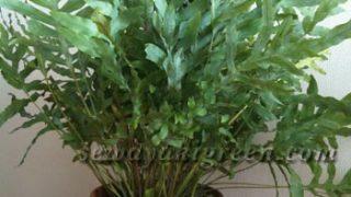 オススメの観葉植物は何ですか?と聞かれて選ぶ1鉢【その1】