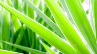 観葉植物、最初の一鉢はこんな目線で選んでみてはいかがでしょう