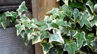 ただの植物好きがオススメする、オシャレな観葉植物5選