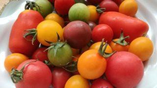ミニトマトの簡単&絶品レシピ、塩マリネ