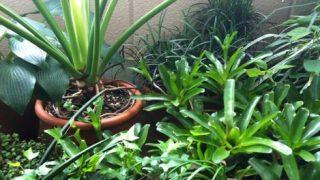 長らく家を空ける際のグリーン対策