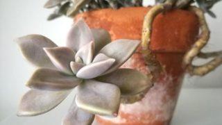 植物パトロールしても気になるのは鉢。というわけで、テラコッタを探してみました