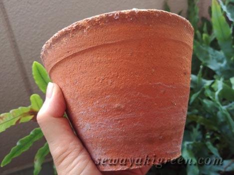 素焼き鉢(テラコッタ)