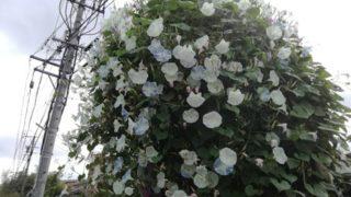 この木、何の木?大量の花をつけた木