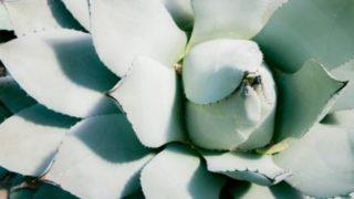 ただの植物好きが選ぶ、オススメしない植物