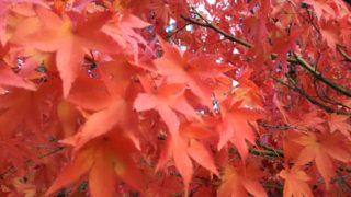 紅葉狩りシーズン突入。紅葉を、目と舌で楽しむ方法