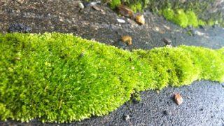 散歩して分かった、この時期元気な植物