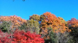 野山の紅葉を楽しんで、思い至ったのは盆栽の奥深さ…