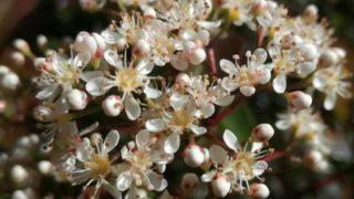 5月は花盛り、自然から学ぶ配色の妙