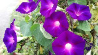 秋には、青や紫の花が映えますね