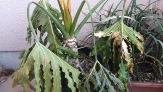 植物の引っ越しは大変。梱包、移動、そして新居での注意点