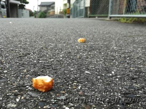 散歩でみつけた落し物