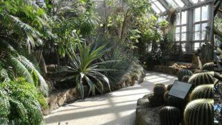 京都で金閣寺に行かず、京都府立植物園に行く植物好き