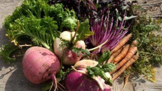 畑を耕しに行くと、野菜を抱えて帰宅する不思議