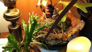 軽石の鉢に植えたもの