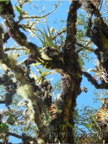 南米の植物たち