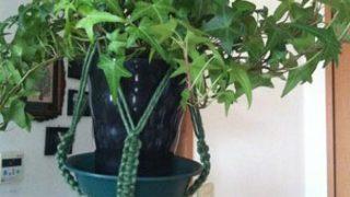 植物の鉢を吊って飾るだけじゃない、マクラメ編みプラントハンガーの使い方