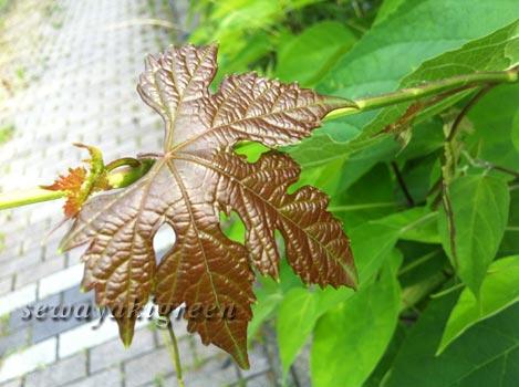 散歩で見つけた植物