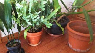 植え替えはグルッと、鉢をローテーション