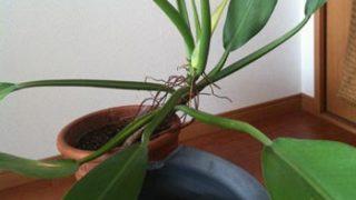 植物と鉢とのバランスは大事ですね