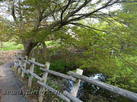 芦野公園(青森県五所川原市)