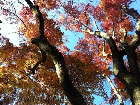 曽木公園(岐阜県土岐市)