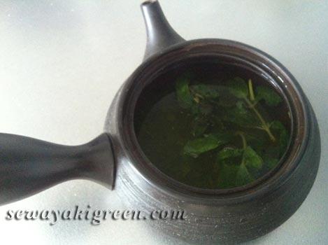 緑茶ミント