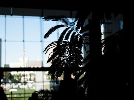 植物のあるインテリア