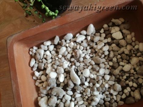 鉢底石(ビーナスライト)