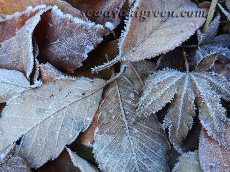 落ち葉に霜