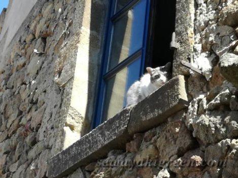 MONPEYROUXのネコ