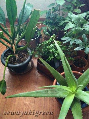 留守時の植物