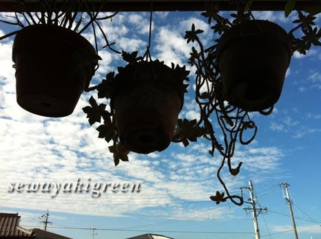 ハンギング植物