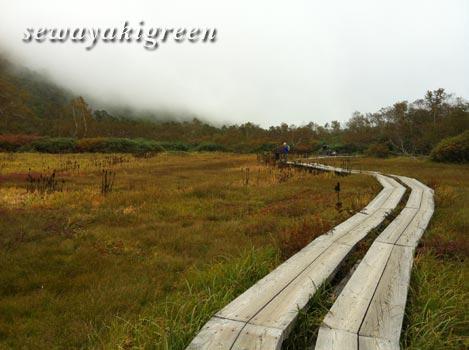 中部山岳国立公園 栂池自然園